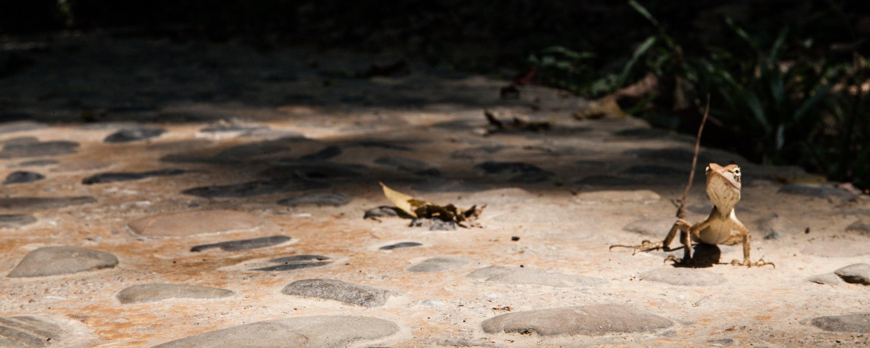 Aaron hopper and Alex Mitchell visit Khao Sok National Park