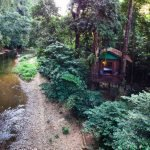 Exterior Drone Treehouse view
